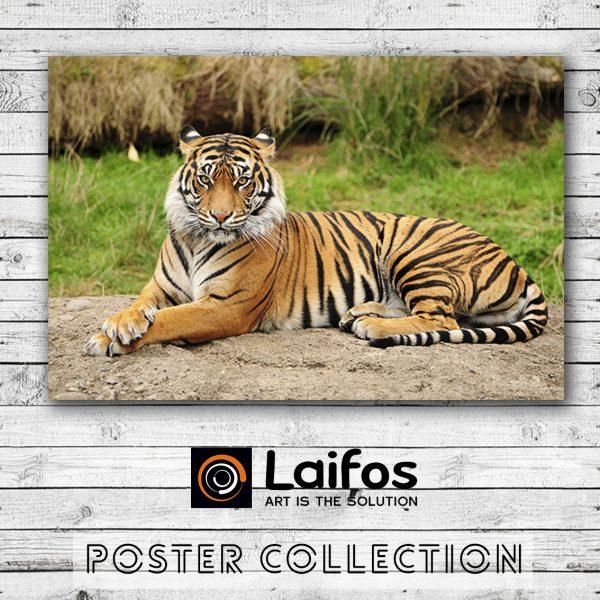 Αφίσα Τίγρης